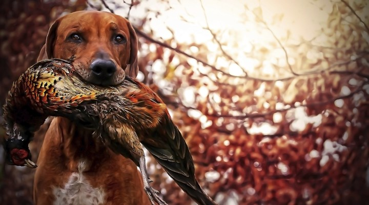 10 Hunting Instagram Accounts You Should Be Following